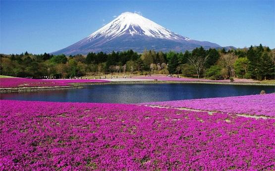 5 lý do bạn nên đến Nhật Bản mùa hoa lavender