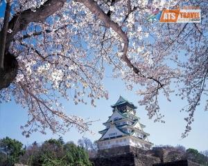 NHẬT BẢN - TOKYO - NÚI PHÚ SỸ - UNEO PARK - VƯỜN DÂU (5N4D)