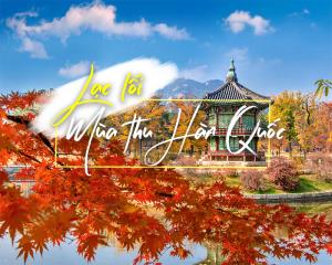 Tour Hàn Quốc Mùa Thu 2020 - Seoul - Nami - Everland (5N4D)